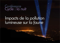 Impacts de la pollution lumineuse sur la faune nocturne